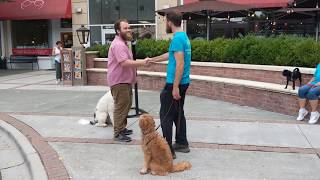 K9 Training School Sam Learning Great Manners Around Dogs
