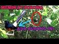 Memikat Semua Jenis Burung  Mp3 - Mp4 Download