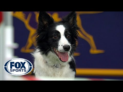 Watch Fame(US) win the 2018 Masters Agility Championship | FOX SPORTS