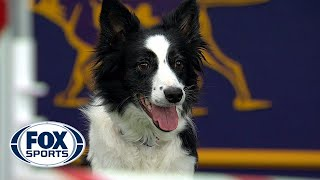 Watch Fame(US) win the 2018 Masters Agility Championship   FOX SPORTS