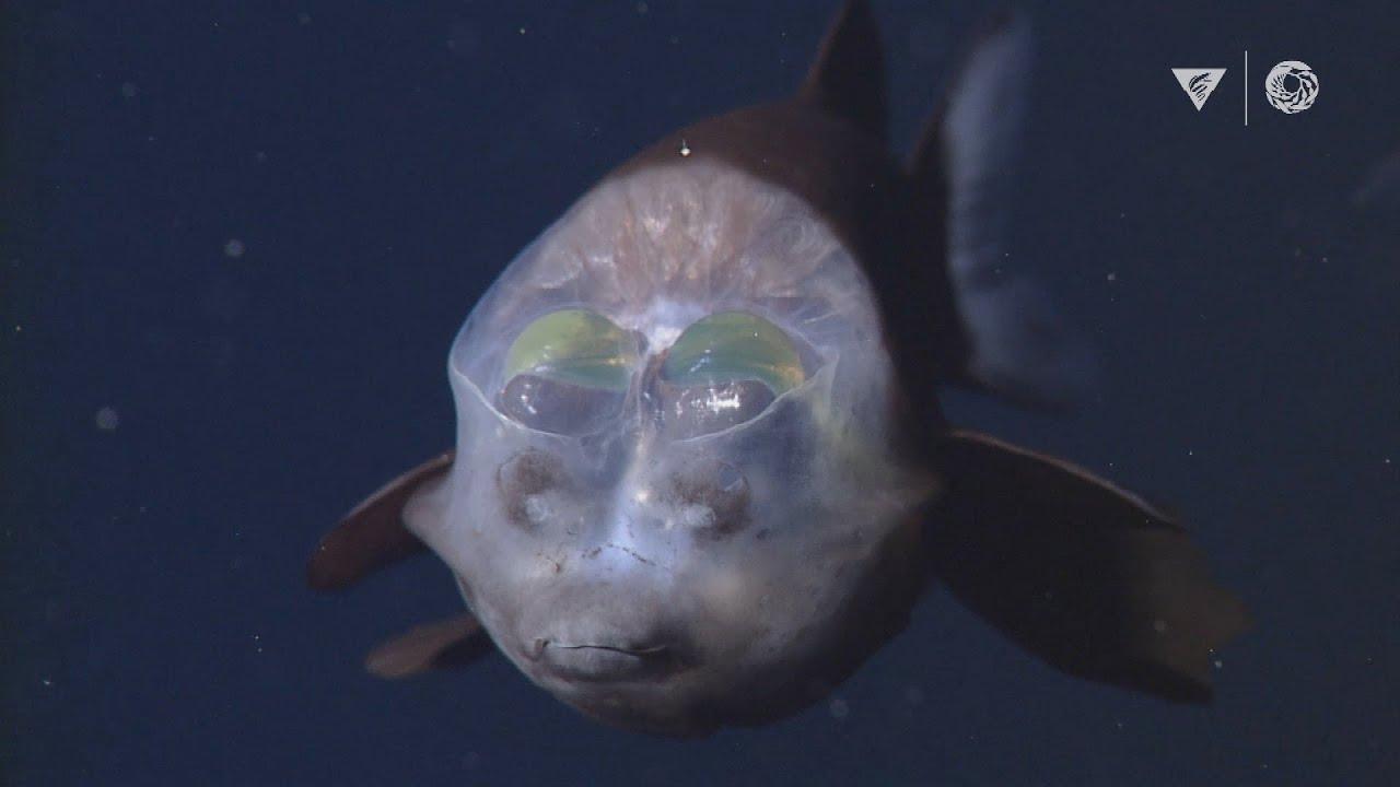 MBARI's Top 10 deep-sea animals