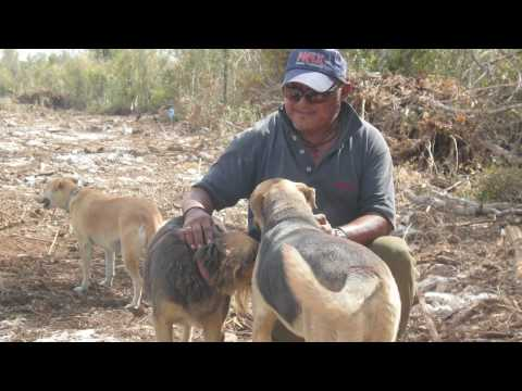 Dump Dogs and Cats of Cozumel, Mexico