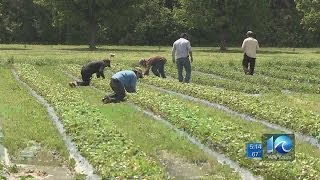 Ava Hurdle on farming hardships in Virginia Beach