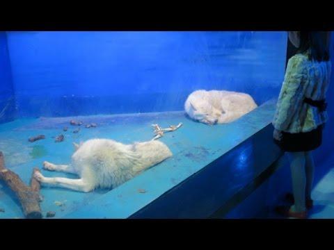 【閲覧注意】驚愕!閉鎖を願い署名が集まる水族館が悲惨・・・