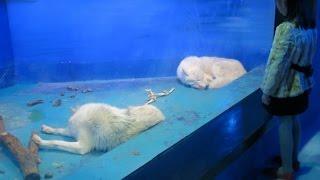 【閲覧注意】驚愕!閉鎖を願い署名が集まる水族館が悲惨・・・ thumbnail