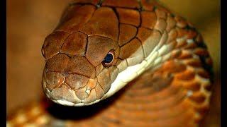 72 самых опасных животных Австралии часть2