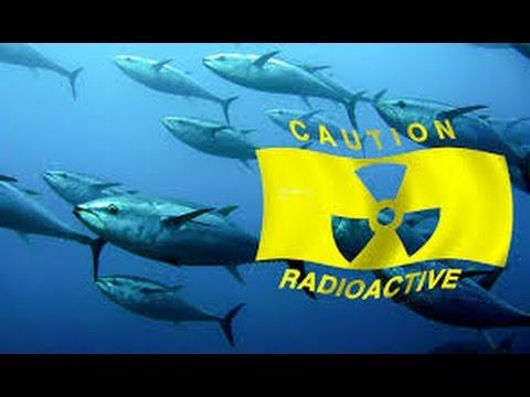 Fukushima News 9/5/15:  Tepco Pumps & Dumps Rads; 'Decontaminated' Schools Reopen