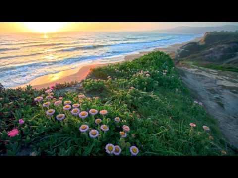 Veselin Tasev - Pacific Waves (Original Extended Mix)