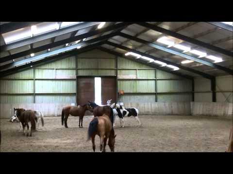 horse behaviour