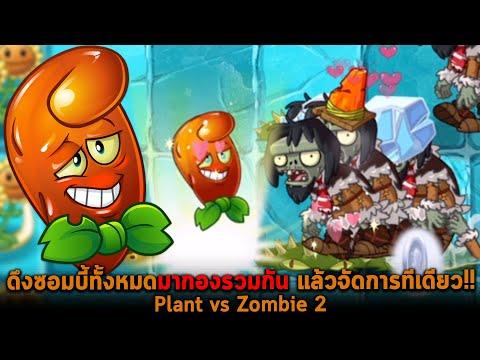 ดึงซอมบี้ทั้งหมดมากองรวมกัน แล้วจัดการทีเดียว Plant vs Zombie 2