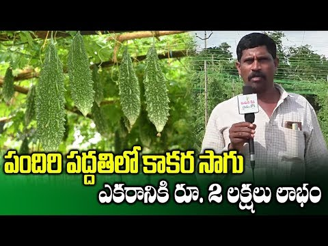 Bitter Gourd Cultivation With Pendal System || Farmer Krishna Reddy || SumanTv Rythu