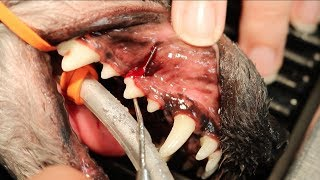 Professional Dental Cleaning & At Home Dental Care For Your Pet | Vlog#9