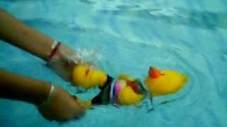 Pato nadando para atras