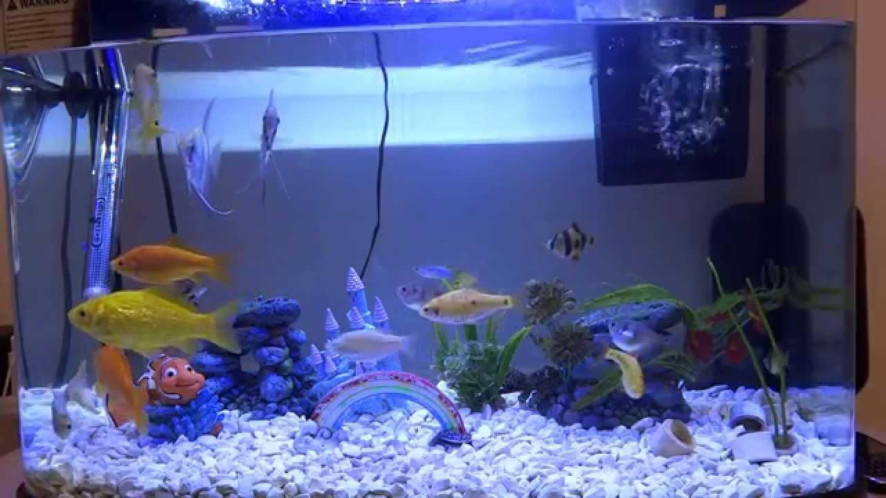 Home Aquarium Plus Feeding Video Hd Youtube