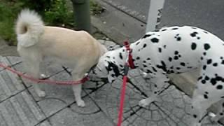 通りに出たら、銀ちゃんがいたので セーラとダッシュしました。