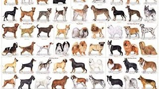 All Dog Breeds in The World  Part 1