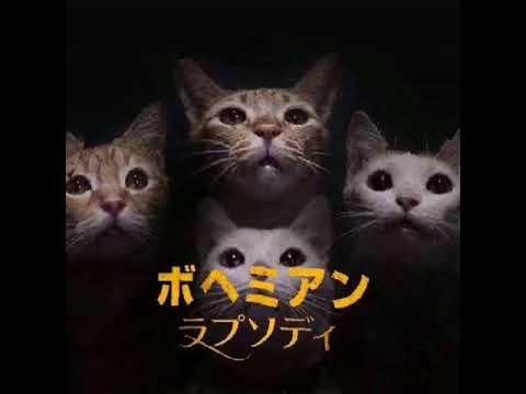 猫にボヘミアンラプソディを歌わせてみた😽