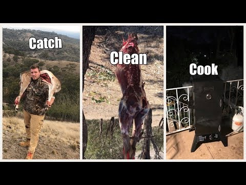 Hunting NSW Deer | Catch | Clean | Cook