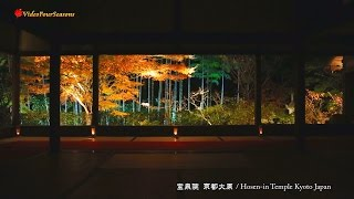 京都 宝泉院の紅葉 Hosen-in Temple Kyoto Japan 【HD】 美しい日本の風景 The Beautiful Scenery of Japan