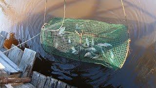 Рыбалка на Мордушку Хороший Улов Карась Ранней Весной