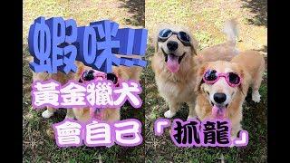 2017【黃金獵犬】十大經典爆笑影片回顧(九),千萬不要再錯過了哦!!