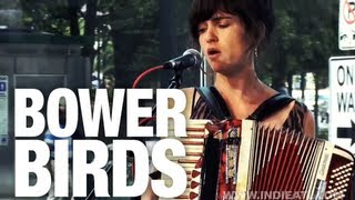 Watch Bowerbirds Teeth video
