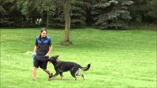 Sherlock (german Shepherd Dog) Obedience Training Video