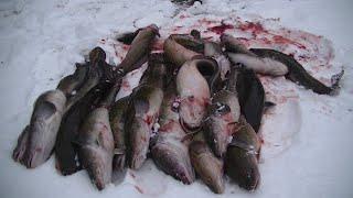 Первый лёд к нам плывёт Рыбалка на Налима