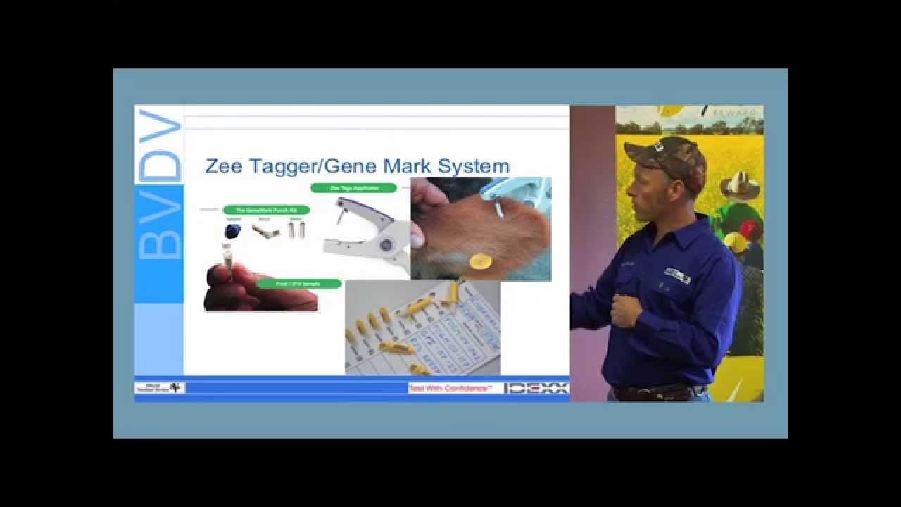 Chapter 2: BVDV: Diagnostic Tools