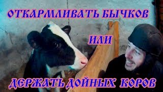БЫК или КОРОВА??Кого выгодно держать//Зачем нам бык?