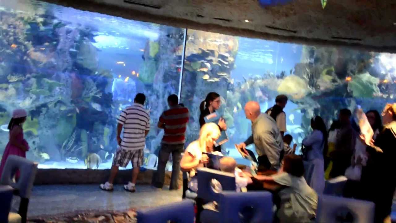 Aquarium Restaurant Opry Mills Mall 2017 You