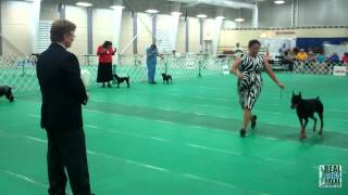 2012 Ukc Premier Total Junior & Total Dog