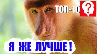 Топ-10 САМЫХ КРАСИВЫХ животных в мире