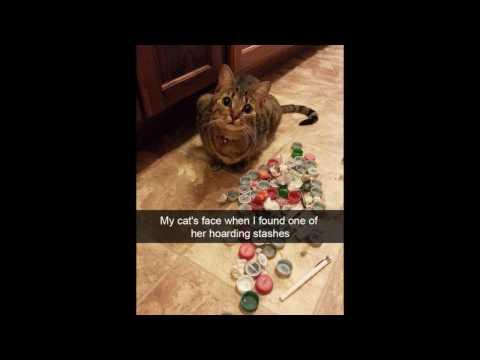 Hilarious Cat Snapchats! --- CAT COMPILATION