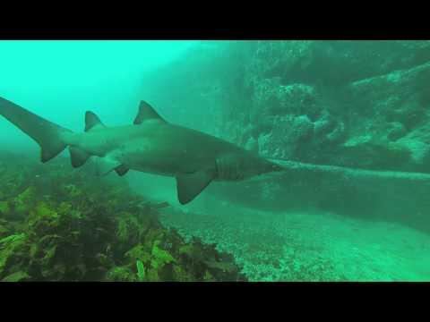 Magic Point Shark Dive - Maroubra, Australia (28/03/2015)