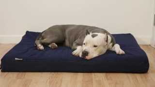 Dogbed4less Orthopedic Memory Foam Waterproof Pet Bed Review