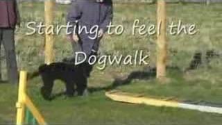 Pre Agility Puppy Training