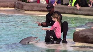 Dolphin Point Playtime at SeaWorld San Diego 1-11-16