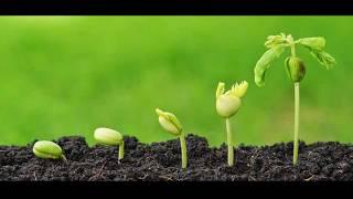Чем можно обработать семена до посева - How can I process the seeds before sowing