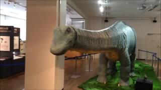ちーたんの館 「丹波竜と竜脚類展」のアパトサウルス