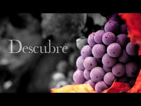 Madrid Rutas del Vino - Alcandora