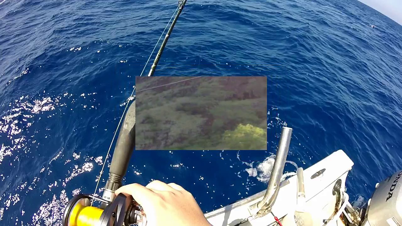 Oahu bottom fishing youtube for Bottom fishing oahu