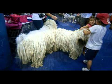 Komondor la EURO DOG SHOW 2012 Bucuresti video Mondo News
