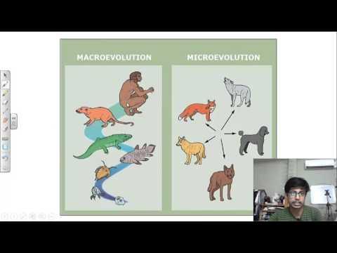 Microevolution Vs Macroevolution Youtube