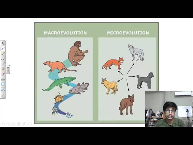an introduction to microevolution and macroevolution Microevolution - macroevolution: evolution & microevolution tutorial - evolution & microevolution tutorial introduction microevolution hardy weinberg equilibrium.