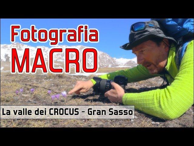 La valle dei CROCUS - Fotografia MACRO al Gran Sasso - TAMRON 35mm F/1.8 - SAMYANG 100mm F/2.8 Macro