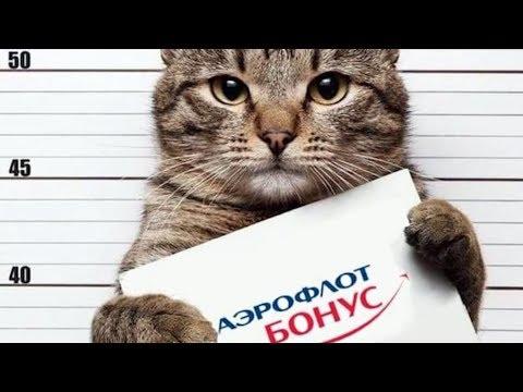 Смотреть Как кота не пустили в самолёт, но он всё равно смог улететь онлайн
