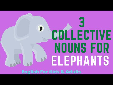 3 Collective Nouns For Elephants