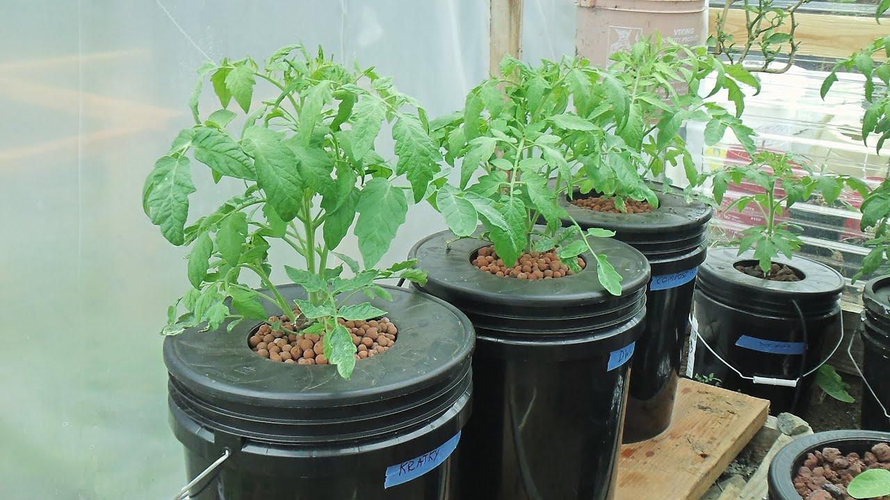 Kratky Method Dwc Compost Tea Hydroponics 2 Hydroponic