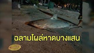 หนุ่มตกปลาที่หาดบางแสน ได้นักล่าแห่งท้องทะเล 'ฉลามหัวบาตร'